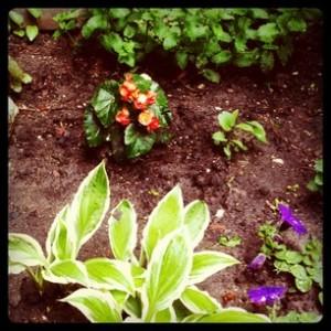 stolen flowers