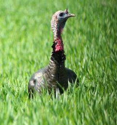 turkey [ 1016 x 1024 Pixel ]