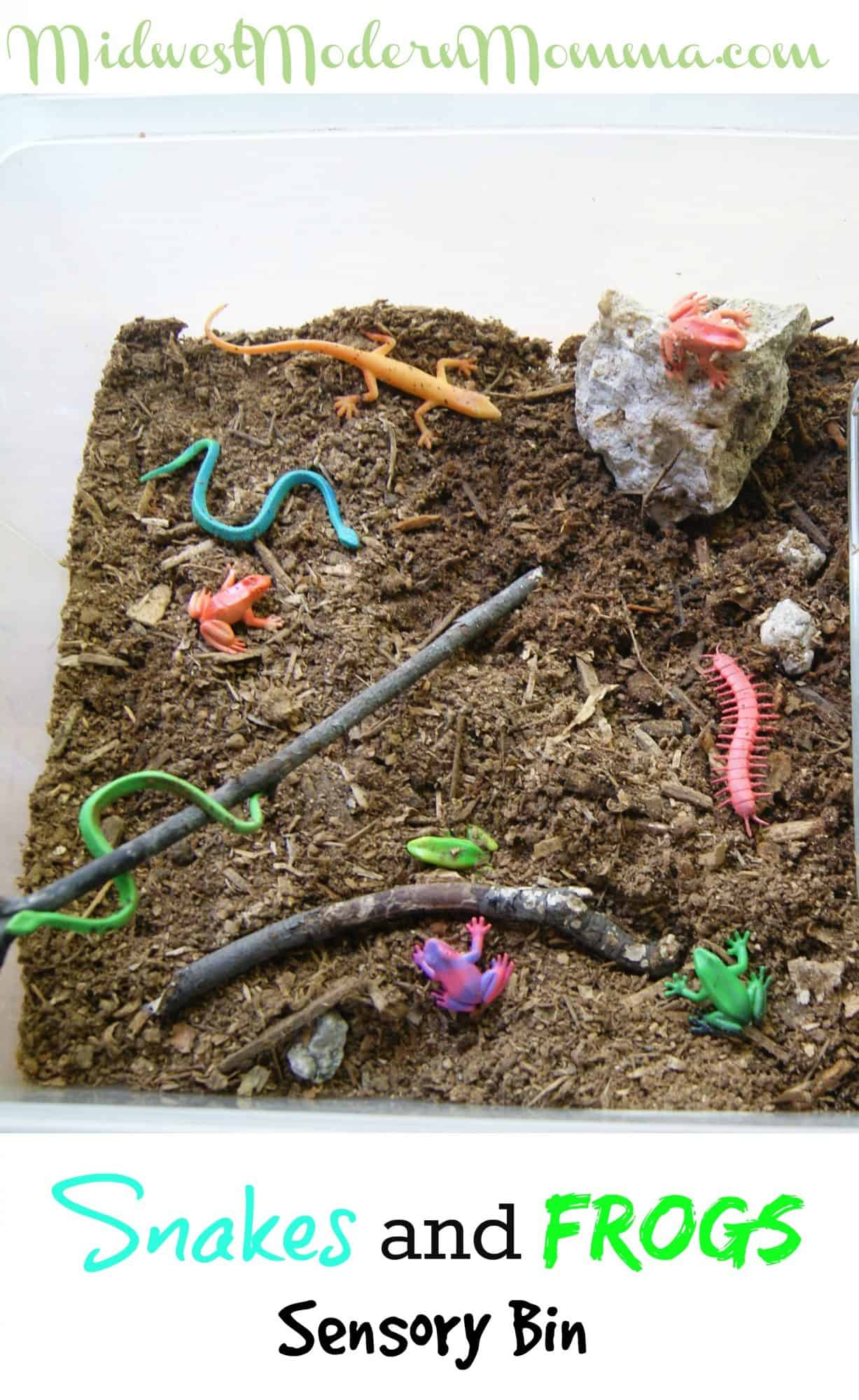 Snakes and Frogs Sensory Bin