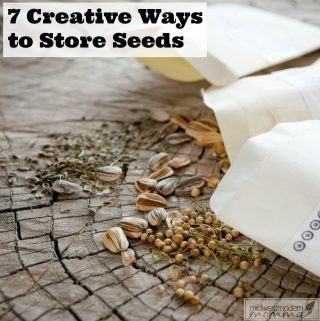 7 Creative Ways To Store Seeds