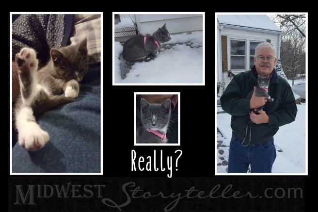 Snow Kitten midweststoryteller.com