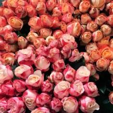 市場でのバラたち