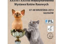 2013-09-03-wystawa-kotow@glogow-fot.-CCW-0101