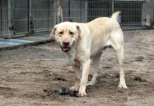 2014-03-06-stowarzyszenie-pomocy-dla-zwierzat-Amicus@Glogow-1508160_10152212644751057_175705675_n