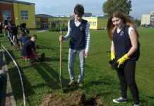 zdjęcie 2014-10-11 głogowscy gimnazjaliści sadzą drzewa@gimnazjum nr 2@Głogów-num