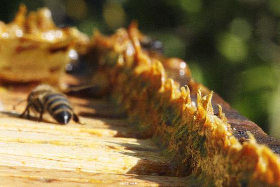 miel propolis, miel et propolis, miel et propolis pure