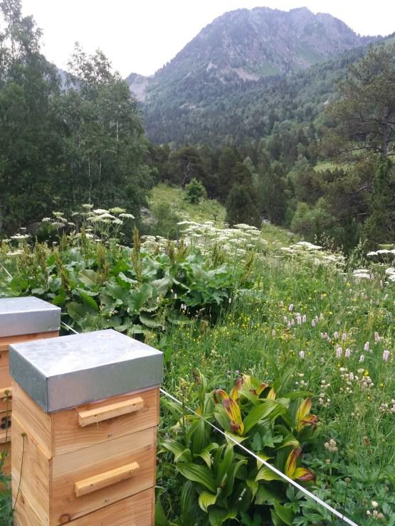 miel-de-haute-montagne, miel de sorteny