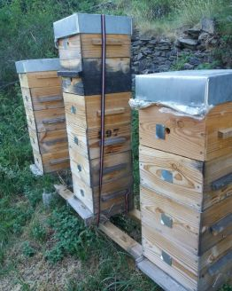 parrainage ruche