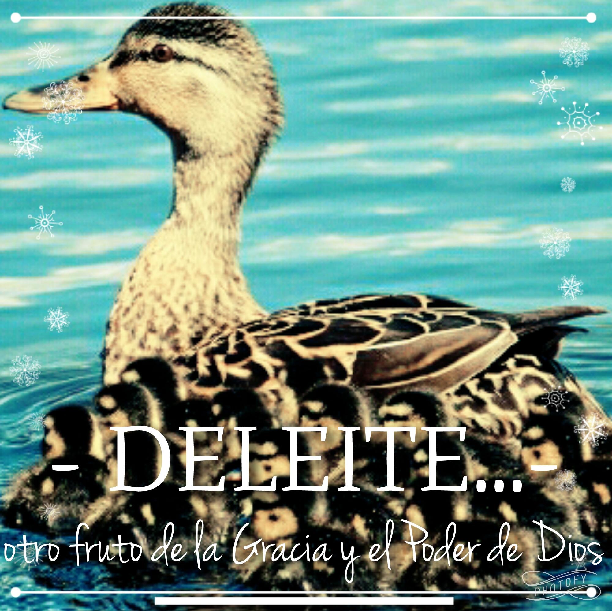 DELEITE… otro fruto de la Gracia y el Poder de Dios