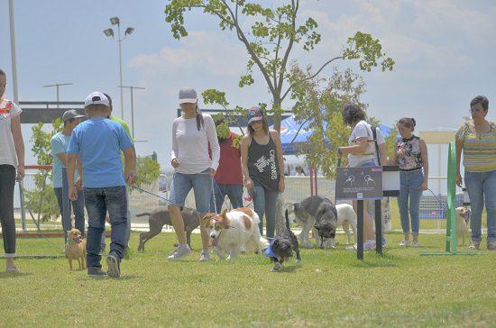 promueven-el-cuidado-y-la-protección-de-perros-en-Festican-Mi-Estilo-Bajío.