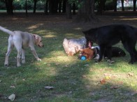 Socjalizacja z psami