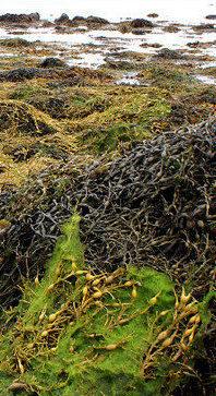 leurre peche mer accroché algues coincé