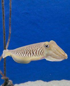 seiche margatte margate pêche