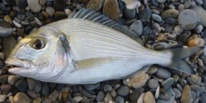 poisson de mer