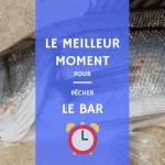 meilleur moment pour pêcher le bar en france poisson