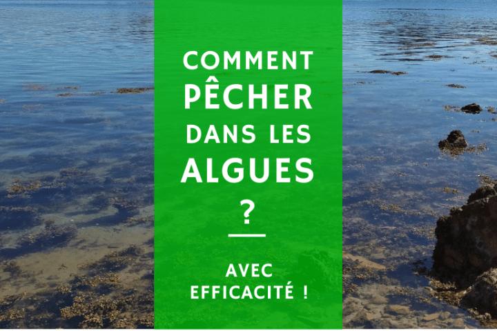 techniques et astuces pour pêcher dans les algues sans accrocher