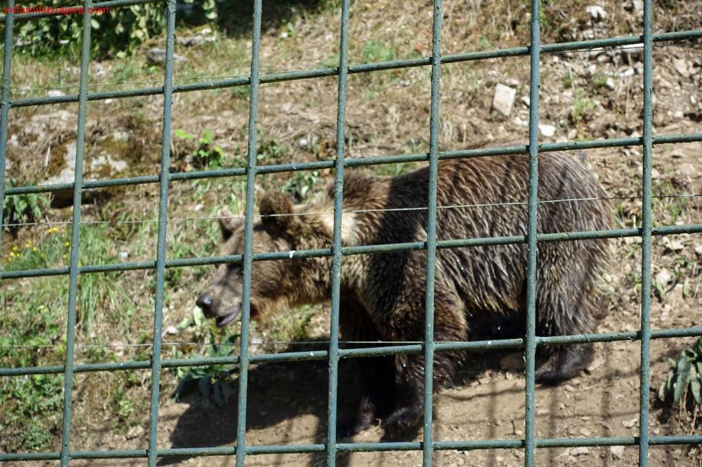 Cercado de osos