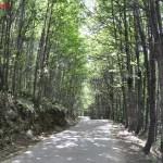 Ruta de Los Pilones, Jerte, Cáceres