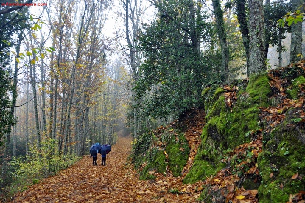 Bosque de La Honfría