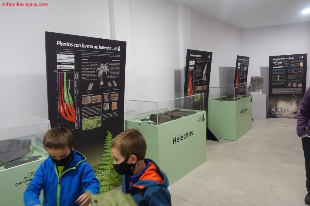 Exposición temporal del Carbonífero