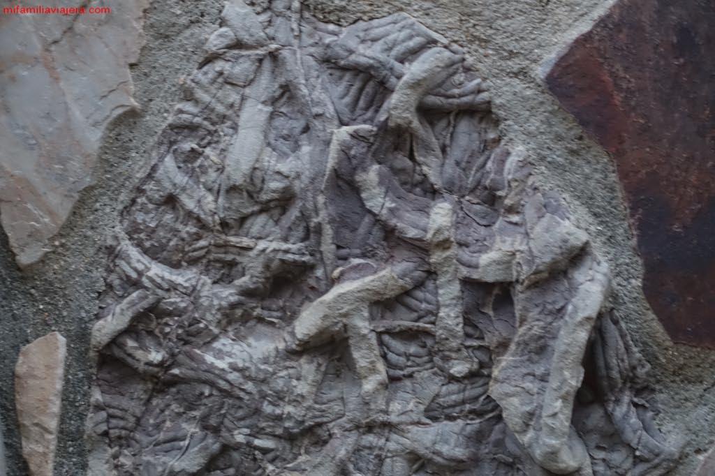 Cruzianas de la Ruta de las Huellas Fósiles de Monsagro