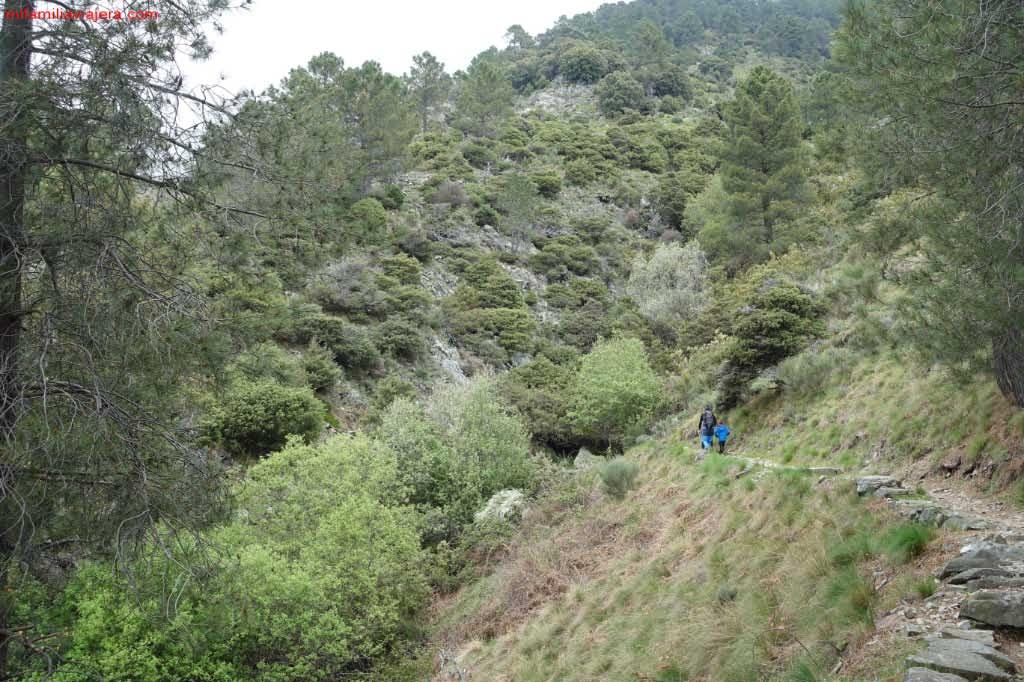 Senda por el bosque de coníferas