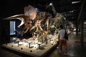再開した恐竜博物館の常設展示。