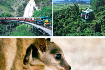 キュランダ列車+スカイレール+大自然動物探検ツアー(星空観測+オージーBBQ)【ケアンズツアーのことならジェイさんツアー】