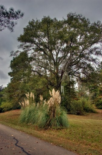 These grasses were 10 feet tall and the world's largest wind chime is in the very large tree behind them.