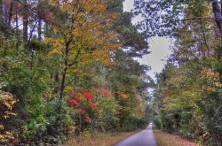 Fall in Mississippi