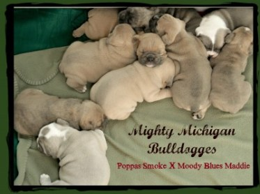 All Nine Puppies Pictured
