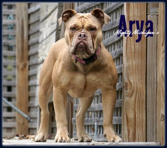 Arya22.1months