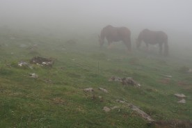 Good stuff: Pyrenees Horses - Basque Country April 26, 2013 on the Camino Santiago