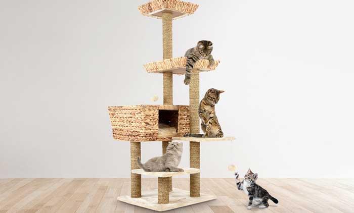 I migliori tiragraffi per gatti Modelli economici e