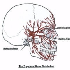 Trigeminal Nerve Diagram Uml Use Case Visio 2013 What Is Neuropathy The Migraine Mantras By Ann Eastman 2