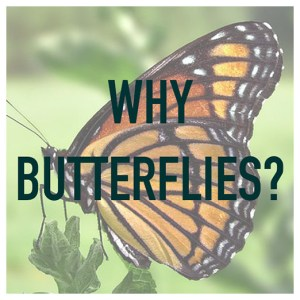 11-why-butterflies