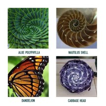 Examples of fractals that we studied.