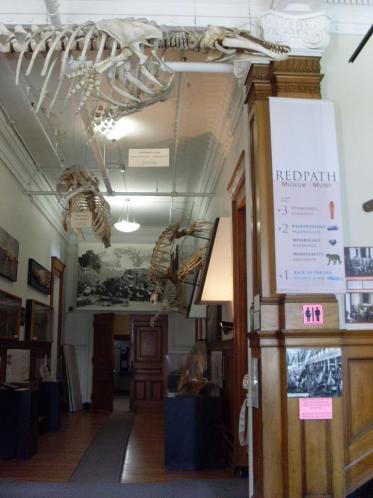 Le hall du Redpath Museum (avec au fond l'entrée vers l'auditorium où j'avais cours)