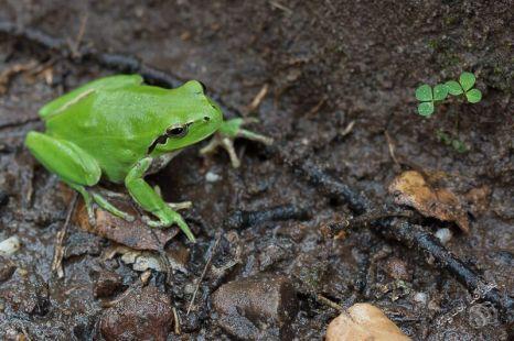 Curso-Reptiles-y-Anfibios-de-Andalucia-3
