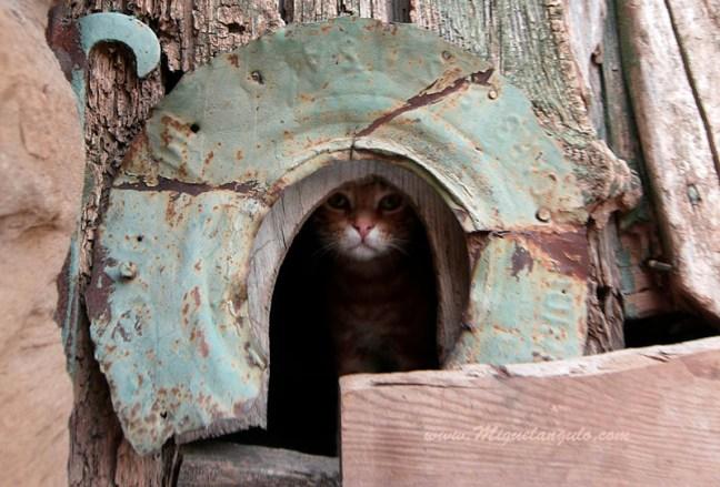 Bolea, un chat nous surveille...
