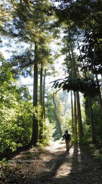 Forêt de Buçaco