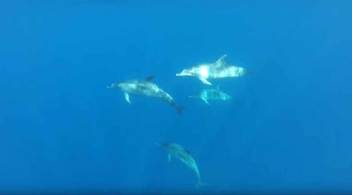 Video Print Screen of Dolphins