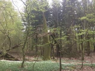 Bosque del sur de Suecia