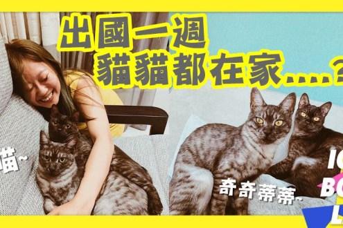 出國一週貓自己在家都在幹嘛?奇奇蒂蒂觀察家