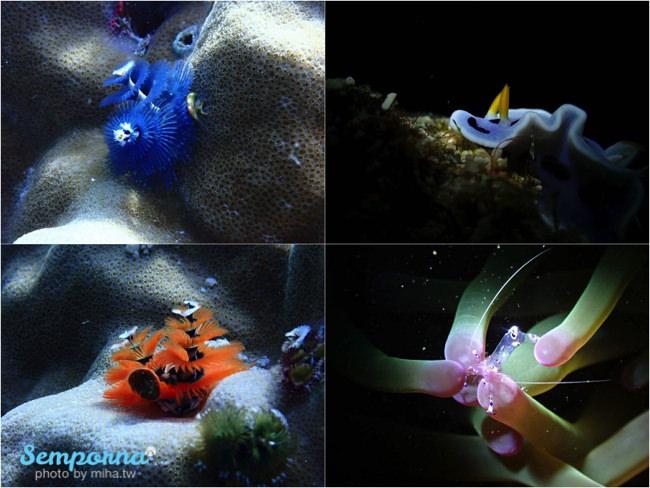 西巴丹島,西巴丹國家公園,西巴丹潛水,仙本那西巴丹,西巴丹,Sipadan,仙本那潛水,馬布島潛水,卡帕萊島潛水