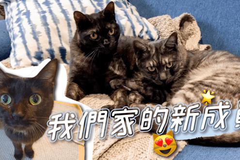 【限時團購】海陸饗宴超殺團購 0穀物寵物飼料 貓貓吃得到野味