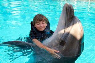 23-david-inoata-cu-delfinul