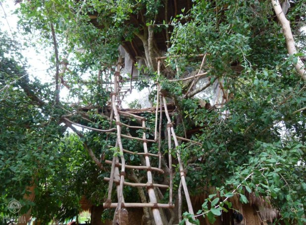 A-tree-hut-experience-The-Allure-of-Nature2