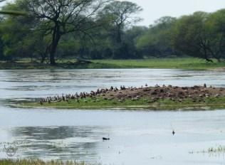 Keoladeo-Ghana-Bird-Sanctuary2
