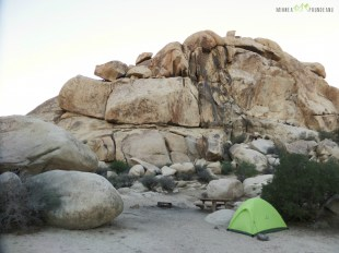 cort-mihnea-in-joshua-tree-national-parc-copy